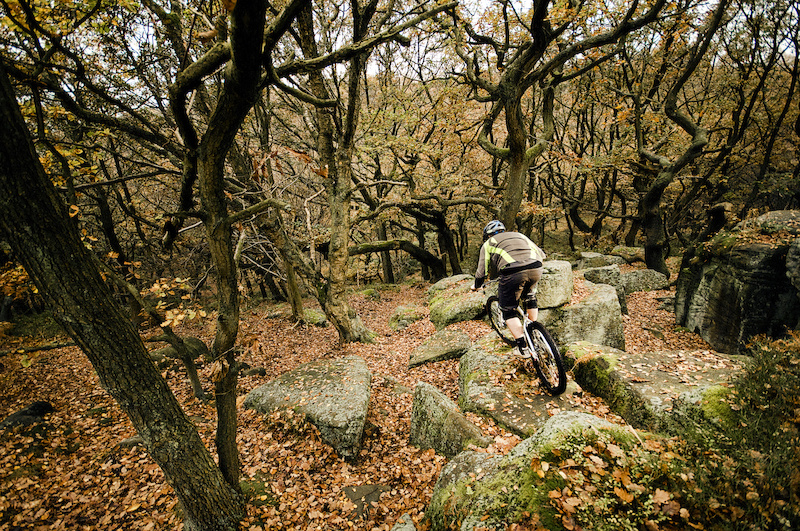 Matt pinning his way through the sea of leaves and on looking gnarled trees.