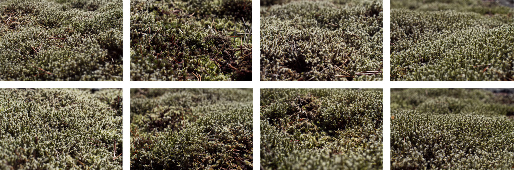 Varieties of terrain but one species of moss.