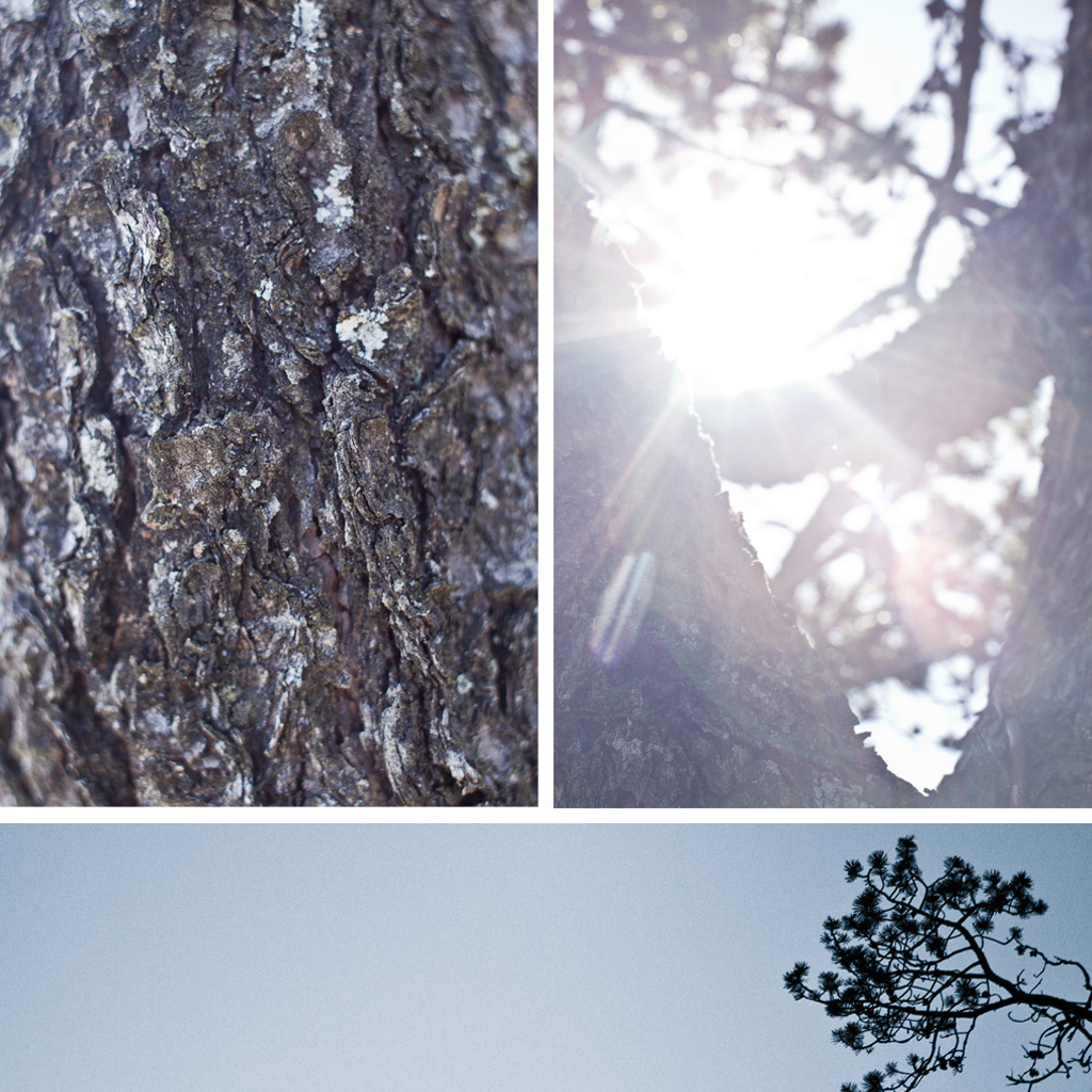 Some lens flare and bark.